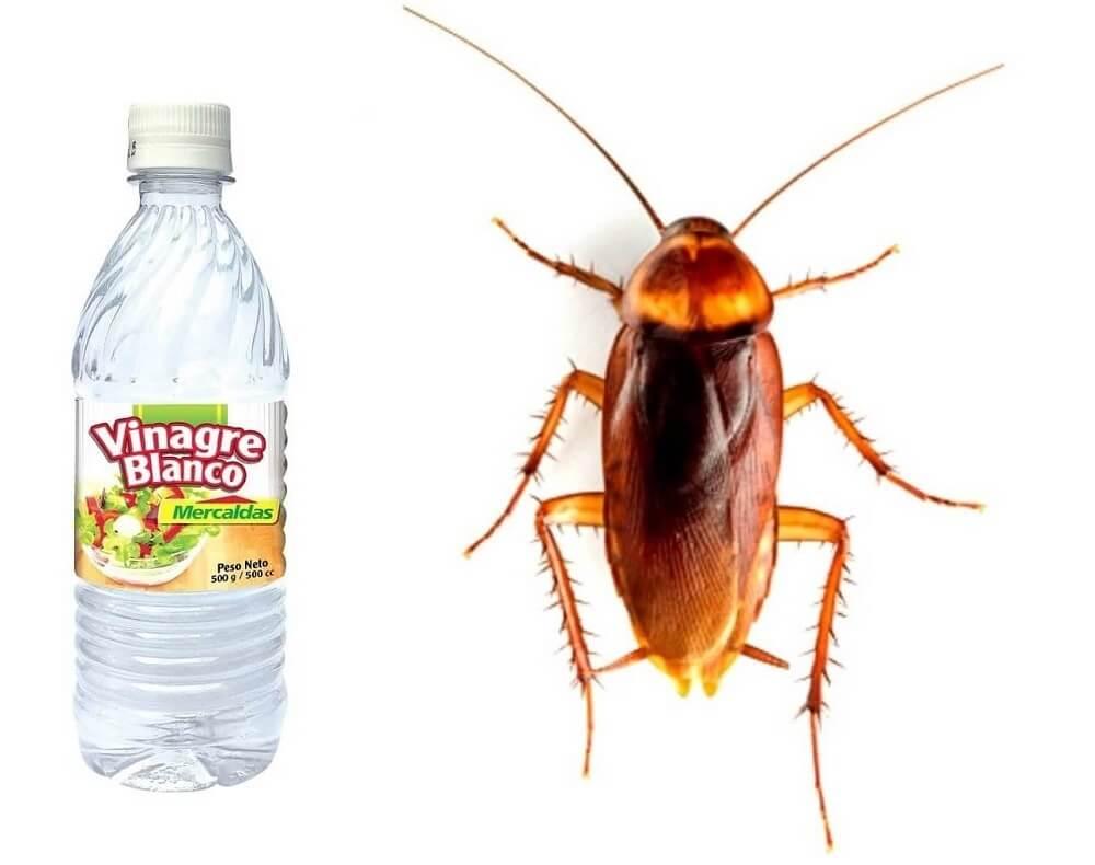 Remedios caseros para las cucarachas