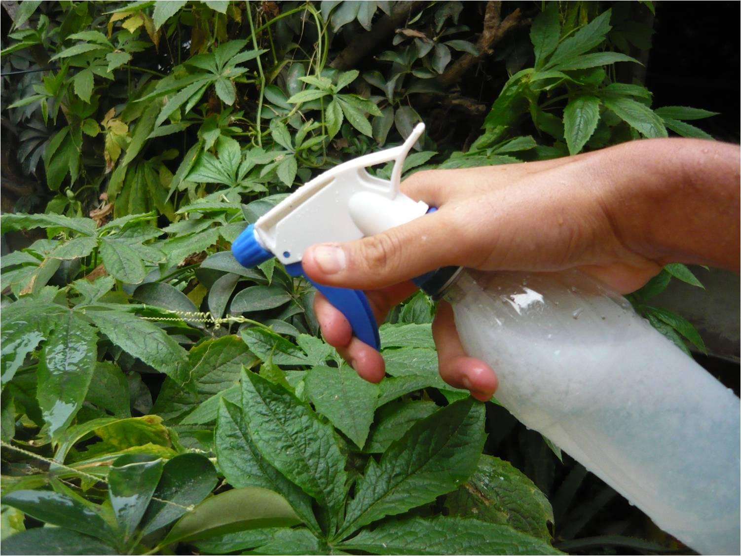 Métodos de eliminación de plagas