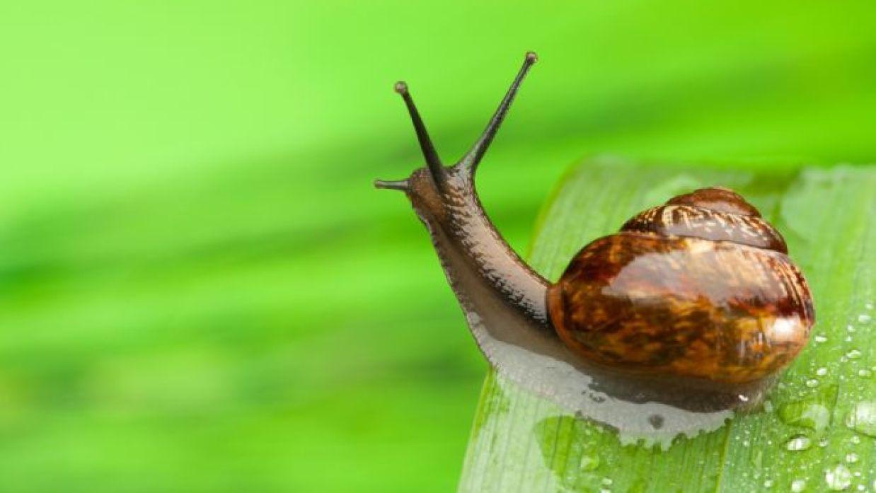 Cómo eliminar una plaga de caracoles
