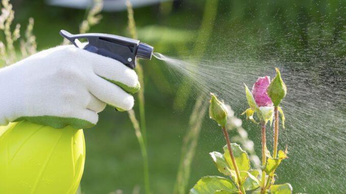 fumigacion de plantas del jardin