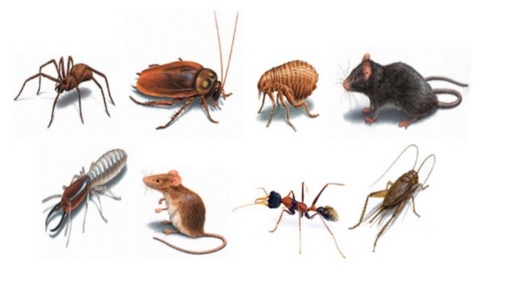 Eliminación de plagas: Recurra a los expertos